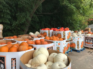 Bushels and bins and pumpkins get staged for the nearly overnight transformation of the Garden.